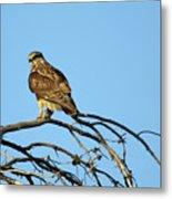 A Hawks Eye View Metal Print