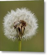 A Head Full Of Wishes Metal Print