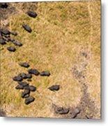 A Herd Of 100+ Elephants, Sw Corner Metal Print