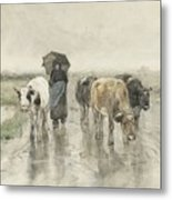 A Herdess With Cows On A Country Road In The Rain Metal Print