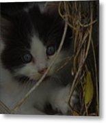 A Hiding Kitten Metal Print