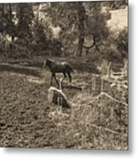 A Horse In The Field Metal Print