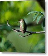 A Hummingbird Rests Metal Print