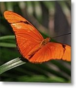 A Julia Butterfly I Metal Print