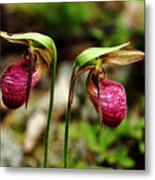 A Lady's Slippers Metal Print