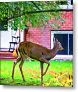 A Lazy Afternoon  Metal Print