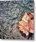 A Leaf's Bow Metal Print