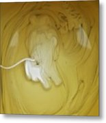 A Lion, But Not In Africa... Metal Print