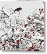 A Little Bird So Cheerfully Sings Metal Print