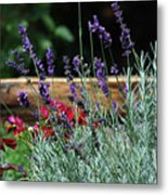 A Little Lavender Metal Print