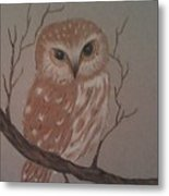 A Little Owl Metal Print by Ginny Youngblood