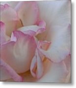 A Little Pink Around The Edges Metal Print