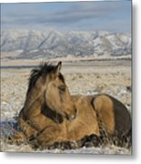 A Little Rest Metal Print by Nicole Markmann Nelson