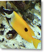 A Little Sunshine In The Water Metal Print