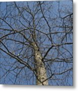 A Look Up A Tree Metal Print