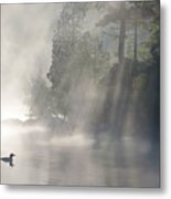 A Loon In The Mist Metal Print by Brian Pelkey