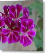 A Magenta Flower Metal Print