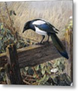 A Magpie Observing Field Mice Metal Print