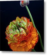 A Many Splendored Thing Metal Print