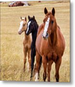A Mare And Two Friends Metal Print