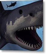A Megalodon Shark From The Cenozoic Era Metal Print