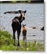 A Mom And Her Baby Metal Print