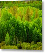 A Moment Of Green Metal Print