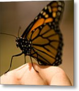 A Monarch Butterfly At The Butterfly Metal Print