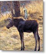 A Moose In Early Spring  Metal Print