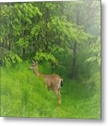 A Morning Stroll  Metal Print