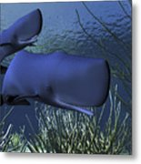 A Mother Sperm Whale Escorts Her Calf Metal Print by Corey Ford