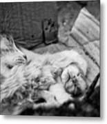 A Mother's Paw Metal Print