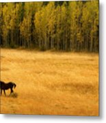 A Nice Autumn Day Metal Print by James BO  Insogna