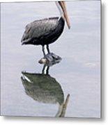 A Noble Bird Is The Pelican Metal Print