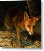 A Nocturne  Meeting With A Fox In The Woodland Metal Print