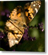 A Painted Lady Butterfly At The Lincoln Metal Print