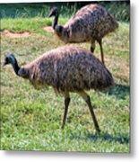 A Pair Of Emu Metal Print
