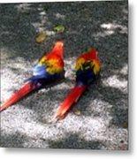 A Pair Of Parrots Metal Print