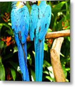 A Pair Of Parrots Metal Print