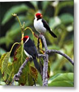A Pair Of Redheads Metal Print