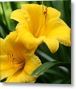 A Pair Of Yellow Day Lilies Metal Print