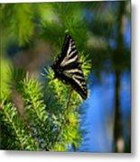 A Pale Swallowtail Vertical Metal Print