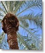 A Palm In The Sky Metal Print