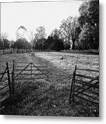 A Pasture Scene  Metal Print