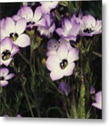 A Patch Of Wildflowers With White Metal Print