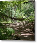 A Path In The Woods Metal Print