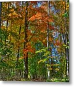 A Path Of Color Metal Print
