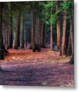 A Path Of Redwoods Metal Print
