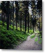 A Path Through A Dense Forest Metal Print