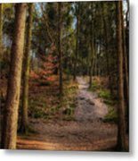 A Path Through The Woods Metal Print
